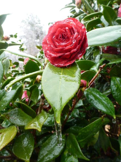 Louisiana Ice Storm (14)