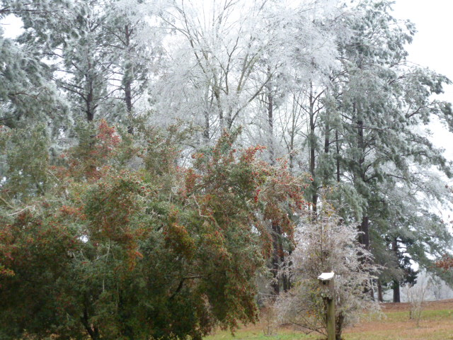 Louisiana Ice Storm (23)