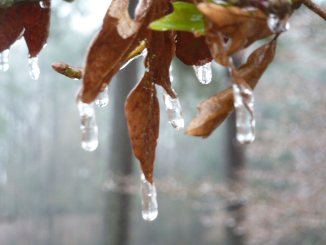 Louisiana Ice Storm (9)