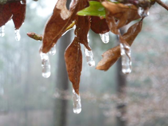 Louisiana Ice Storm (9)