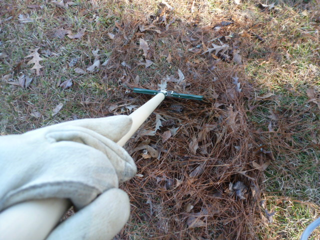 Raking Pine Straw (7)