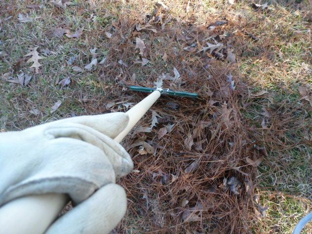 Raking Pine Straw (7)