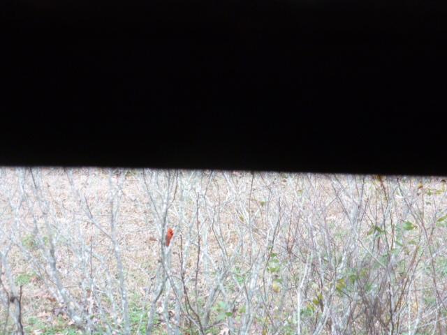 Red Bird Memories (2)