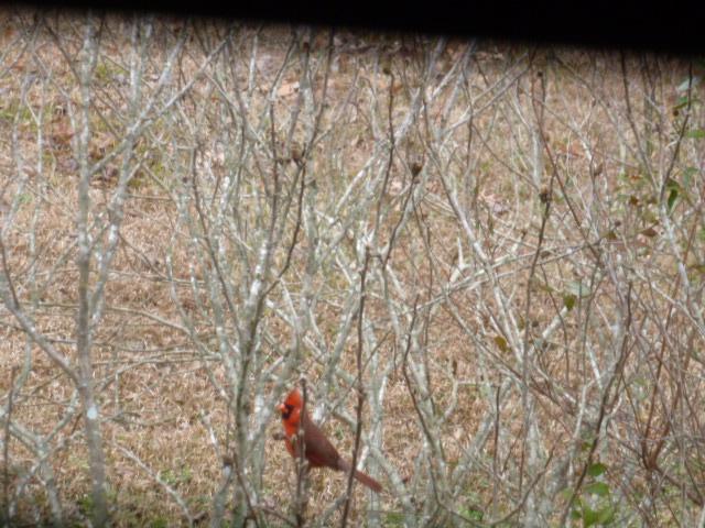 Red Bird Memories (3)