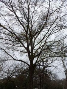 Jackson Parish Tree