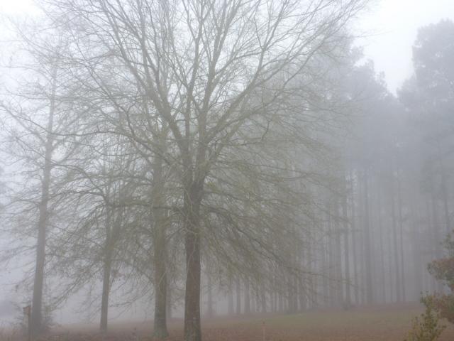 Misty Dream Tree Bayou (5)