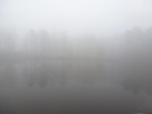 Misty Dream Tree Bayou (6)