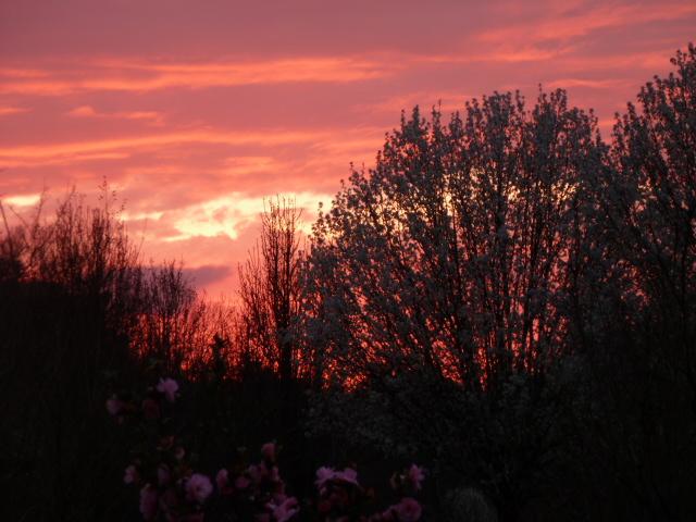 Spring Sunset (4)
