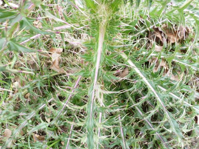 Alien Plant (4)