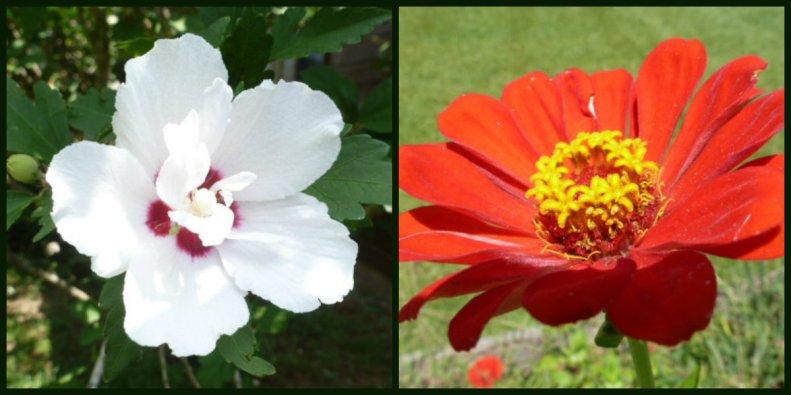 Late Summer Flora