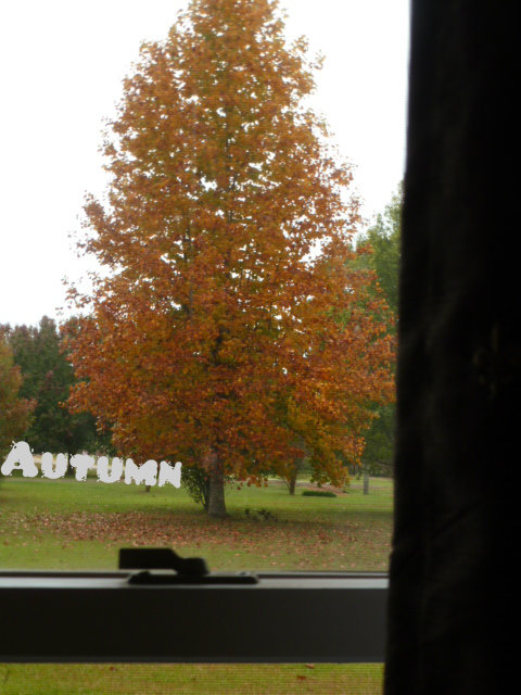 Autumn Oak (2)