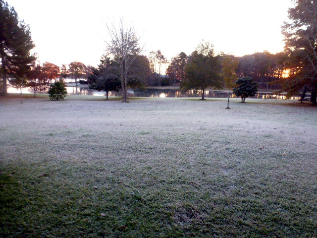 Frosty Morning on the Bayou (14)
