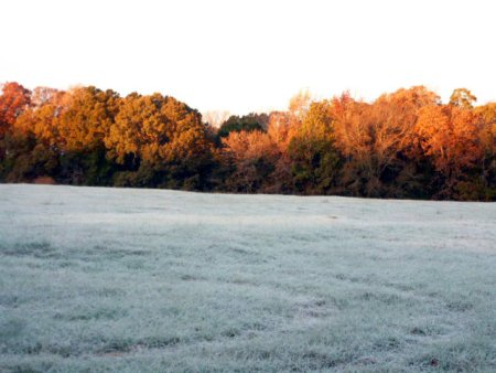 frosty-morning-on-the-bayou-25