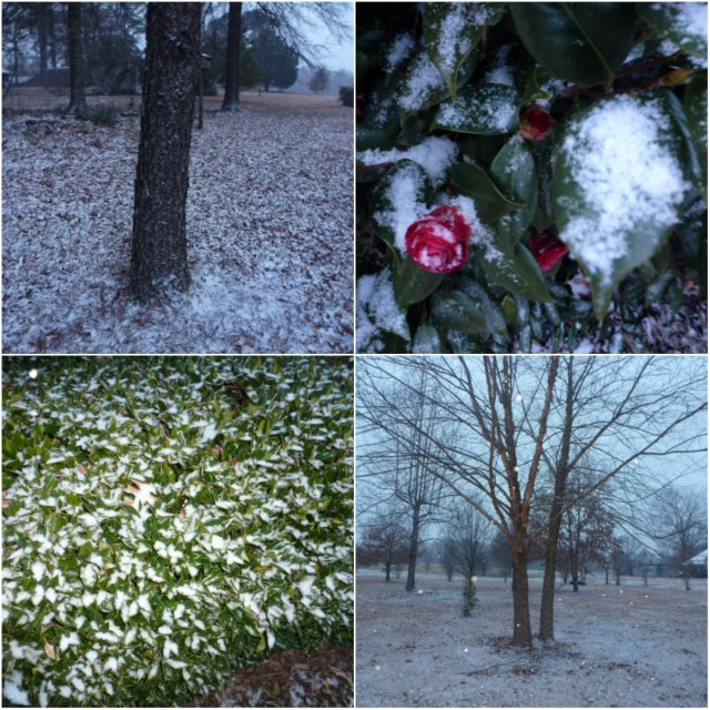 Snow on the Bayou (2)