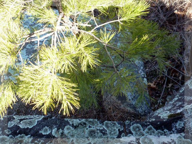 Mt. Nebo  2014 (5)