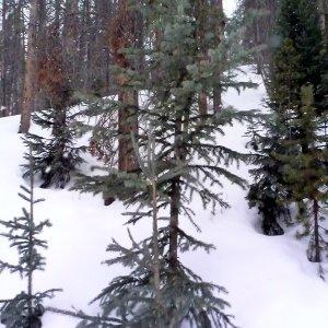 Breck 2015 (9)