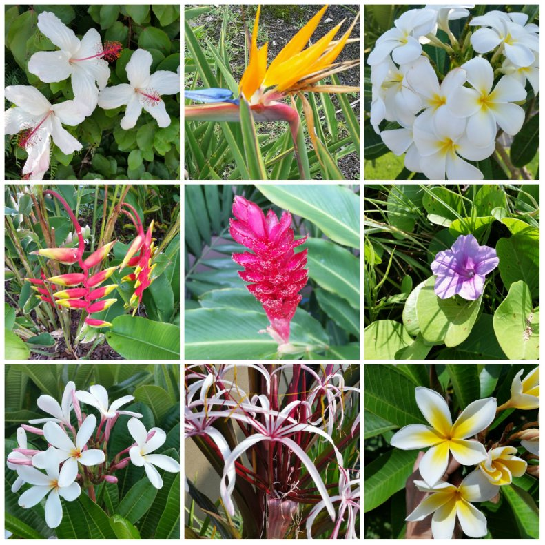 Flora Around Hawaii